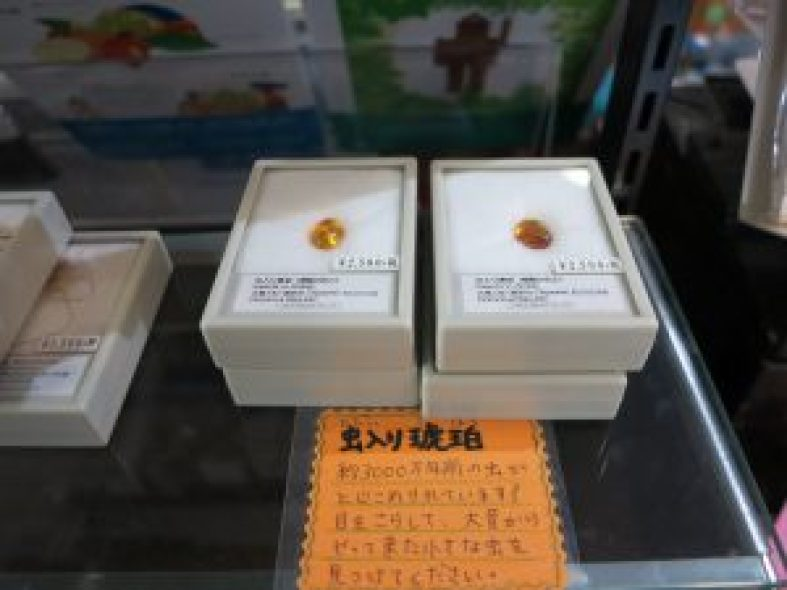 子ども博物館と京都大学博物館お土産8