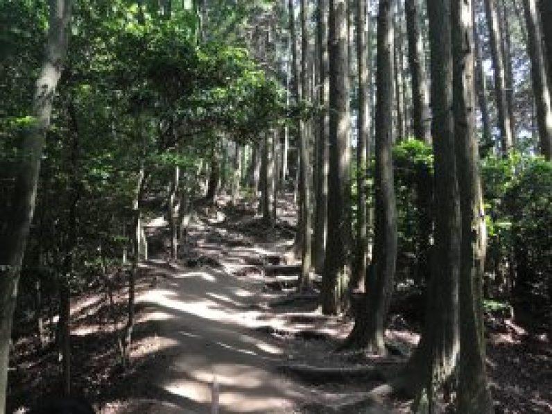 大文字山京都トレイル13