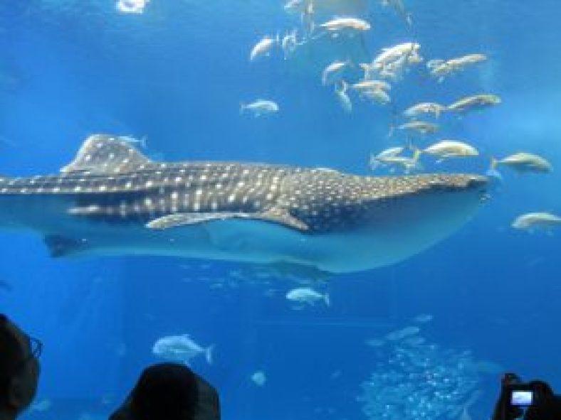 美ら海水族館4