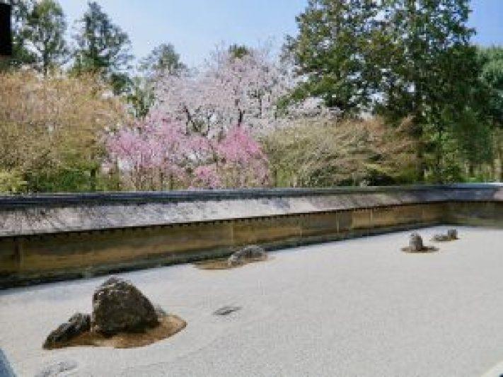 龍安寺桜11