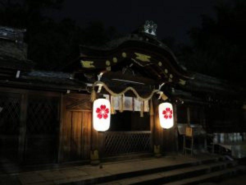 平野神社夜桜14