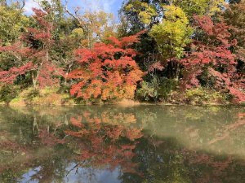 京都植物園6