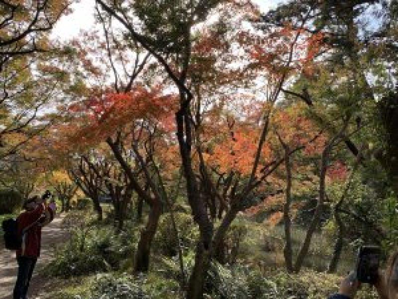 京都植物園2