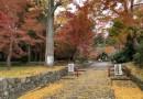 鷺宮神社1