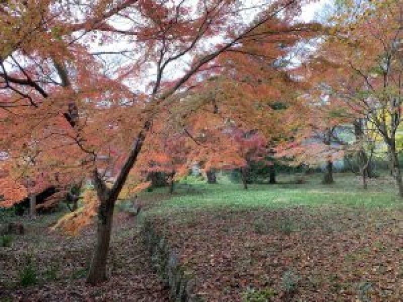 鷺宮神社4