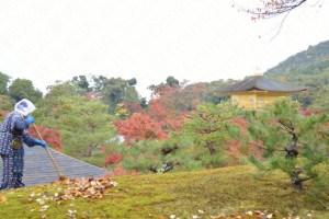 金閣寺の紅葉2016