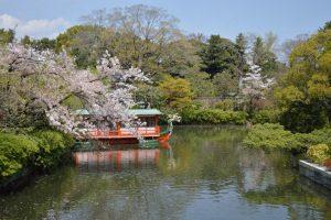 神泉苑の桜2017