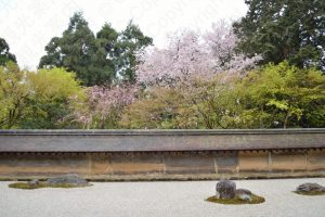 the rock garden of Ryoanji