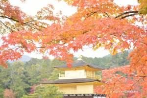 金閣寺の紅葉 2016