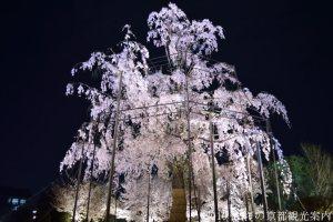 2018年3月29日東寺の桜