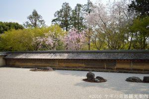 龍安寺の桜 2018
