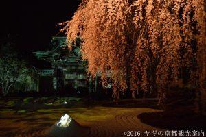 高台寺の桜ライトアップ2018