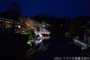 神泉苑の桜 2018