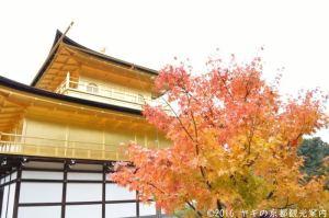 金閣寺の紅葉  この位置から撮影しています。人が沢山いますが、待っていればすぐ最前列で撮影できます。