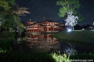 平等院鳳凰堂の桜ライトアップ