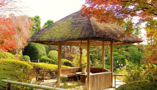 🍁 京都・妙心寺塔頭「退蔵院」の紅葉と抹茶 Taizoin Myoshinji KYOTO