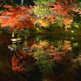 京都・高台寺・紅葉・ライトアップ