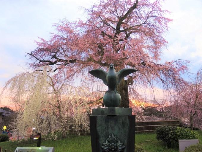 京都・円山公園・祇園枝垂桜