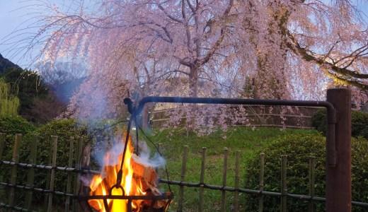 🌸 京都・円山公園「祇園しだれ桜」と 篝火 weeping cherry  KYOTO