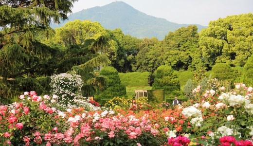 🌹 京都府立植物園「バラ園」の風景 Kyoto Botanical Gardens