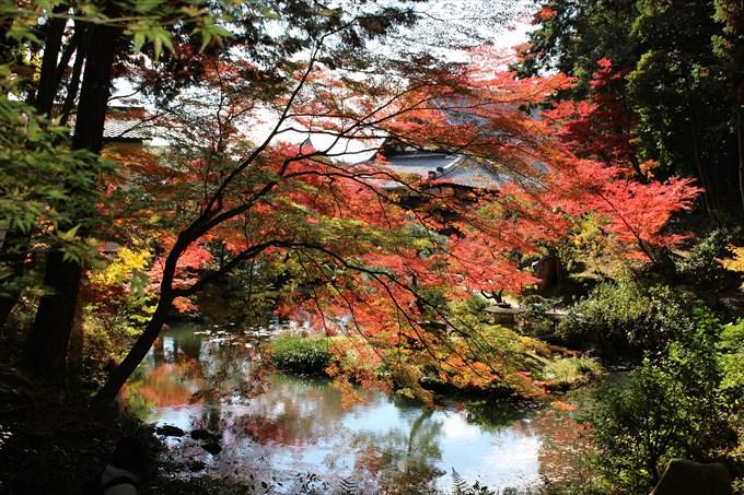 44紅葉と大方丈と池