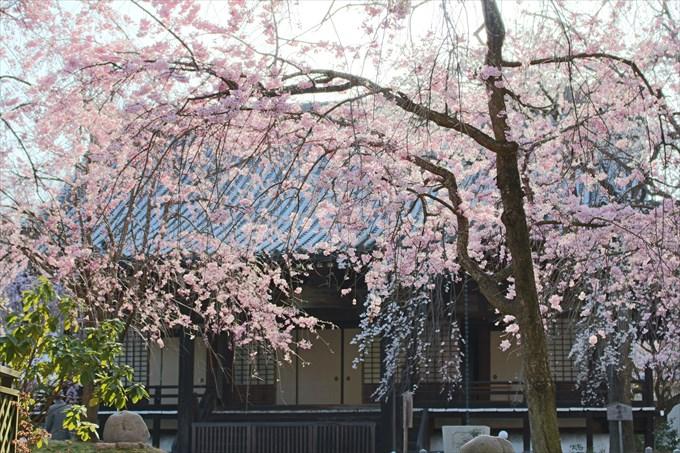 20桜園から大書院を撮影 (2)