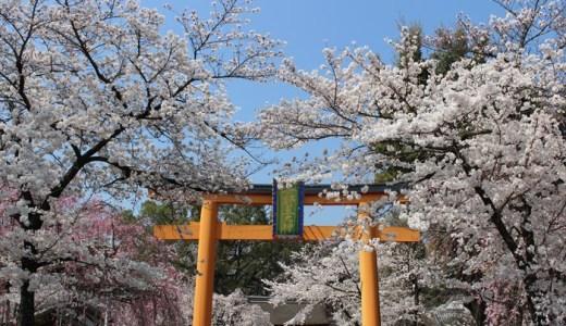 平野神社の桜!見頃はいつ?御朱印も頂きました♪