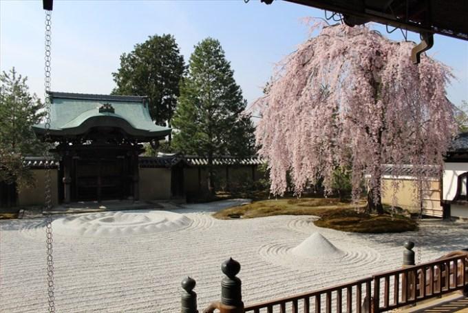 21高台寺の勅使門と桜2