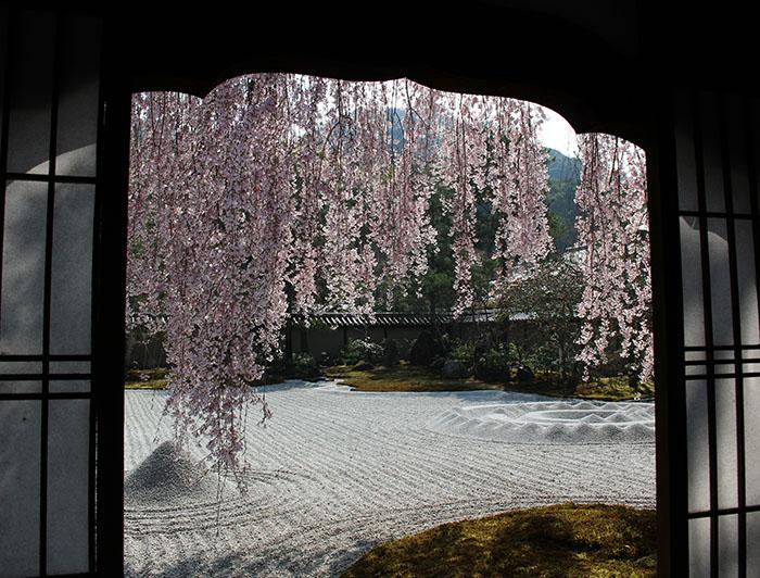 12窓の内側から桜を撮る