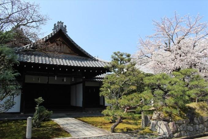 35立本寺方丈玄関と桜
