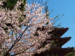 醍醐寺見どころ