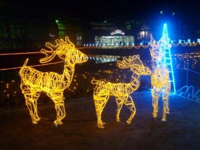 京都府立植物園クリスマスイルミネーション