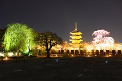 東寺夜桜ライトアップ
