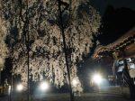 大石神社ライトアップ