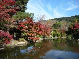 円山公園紅葉見ごろ
