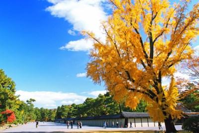 京都御苑紅葉見ごろ