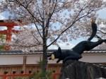 伏見稲荷大社桜