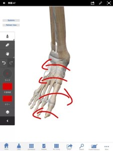 足骨のねじれ2