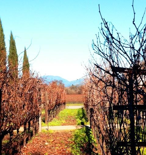 winery row