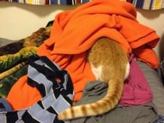 Blankets!!