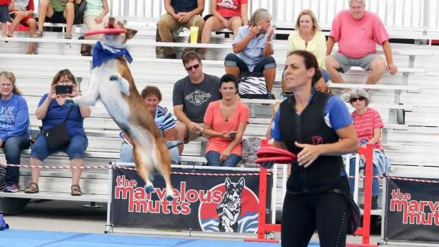 Fun for the Whole Family at the Kentucky State Fair! - KY