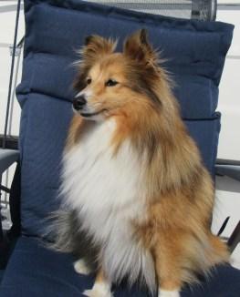 Skipshunden Lady