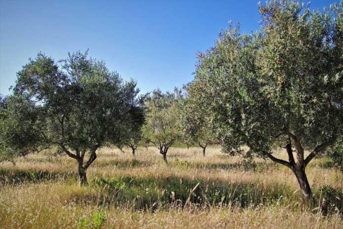 terra-kytheria-ergaleia-efyous-georgias