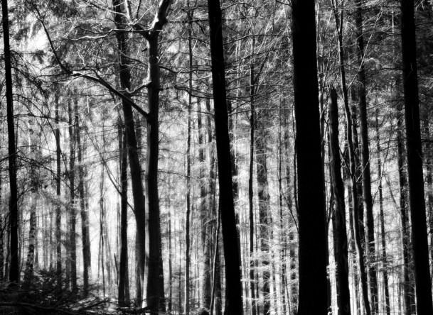 Wald_von_Ennor05