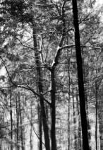 Wald_von_Ennor07