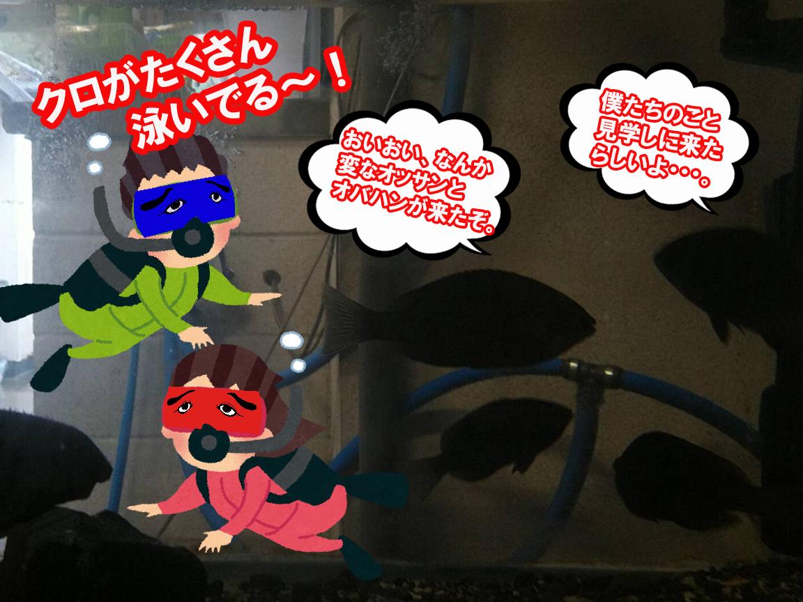 YouTubeチャンネル『釣りみにまにも』さん、『ササキ水産』さんの水槽拝見。vol.2