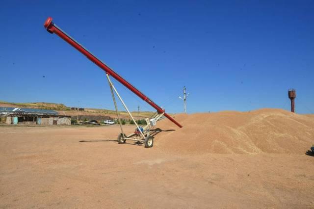 Оңтүстіктің дихандары 600 мың тоннаға жуық дәнді дақыл жинады