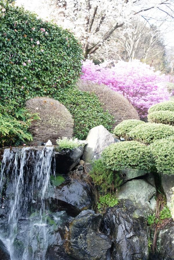 滝と紫ツツジ