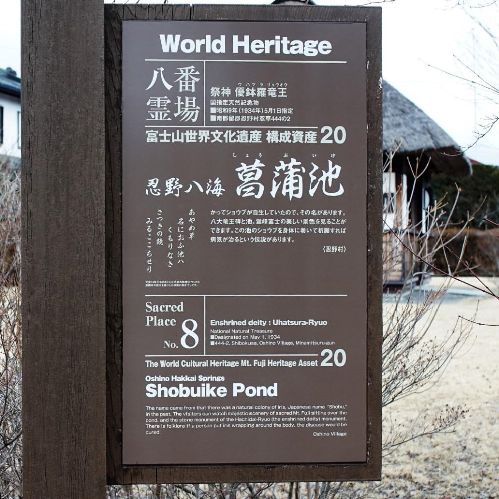 忍野八海菖蒲池