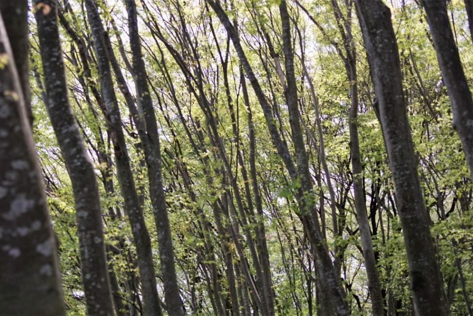 さいたま緑の森博物館
